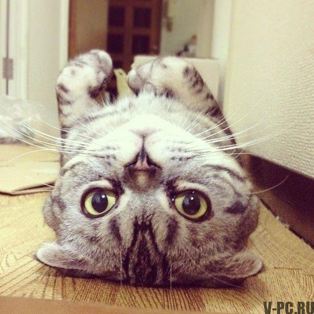 1351197285_cat_wins_22_1