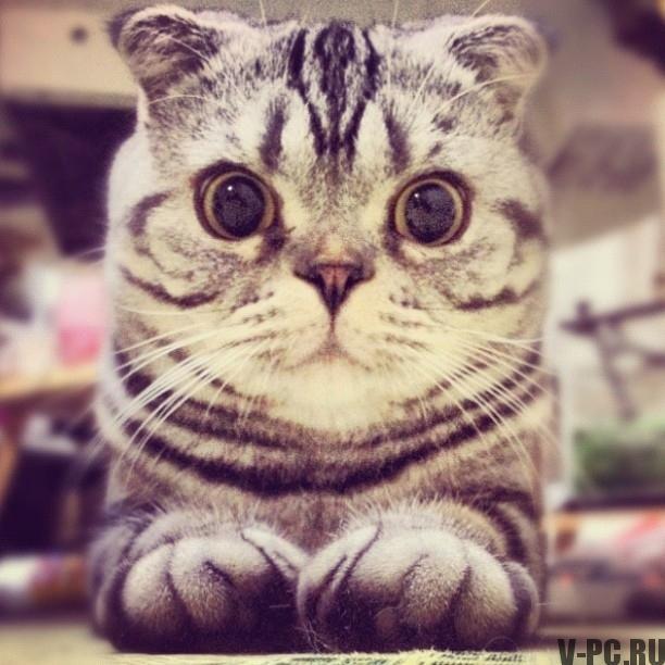 кошка инстаграм
