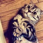 Кошка Шиши Мару – звезда Instagram