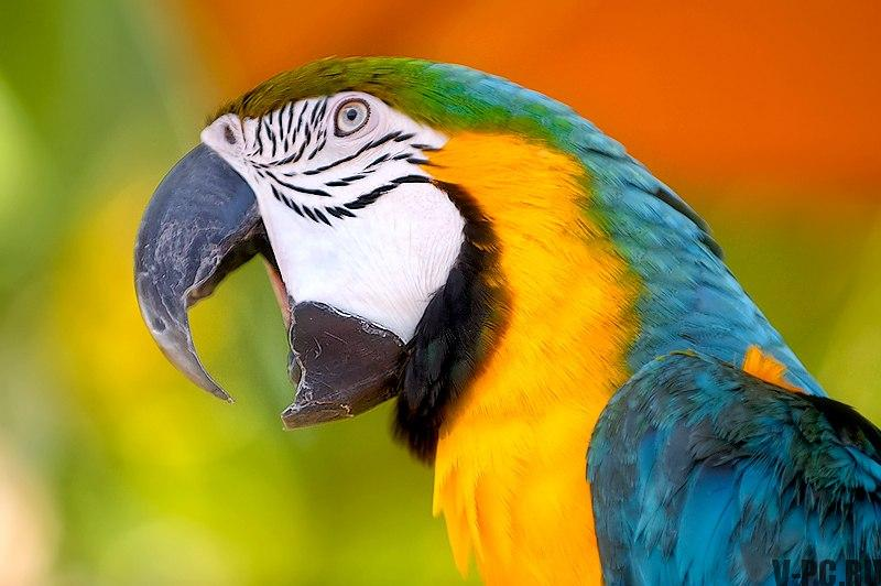 попугай в инстаграм